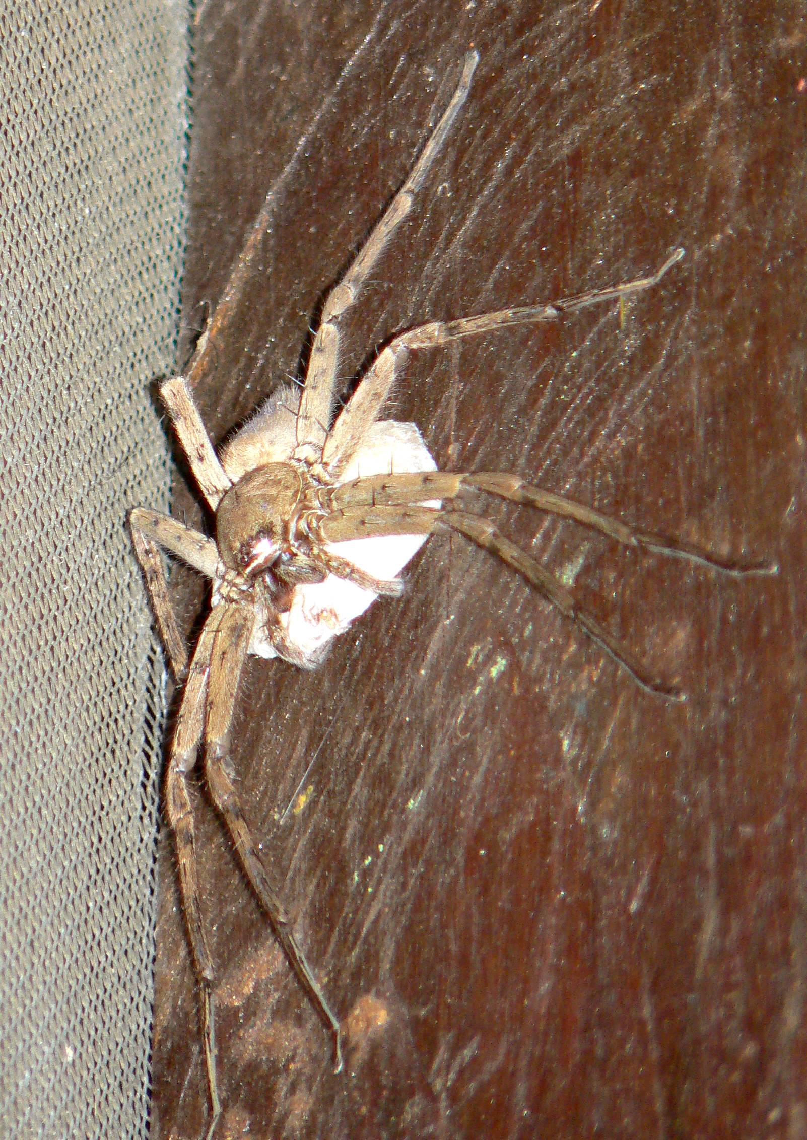 Araign e tour du monde oc ane et julien - Une araignee dans la salle de bain ...